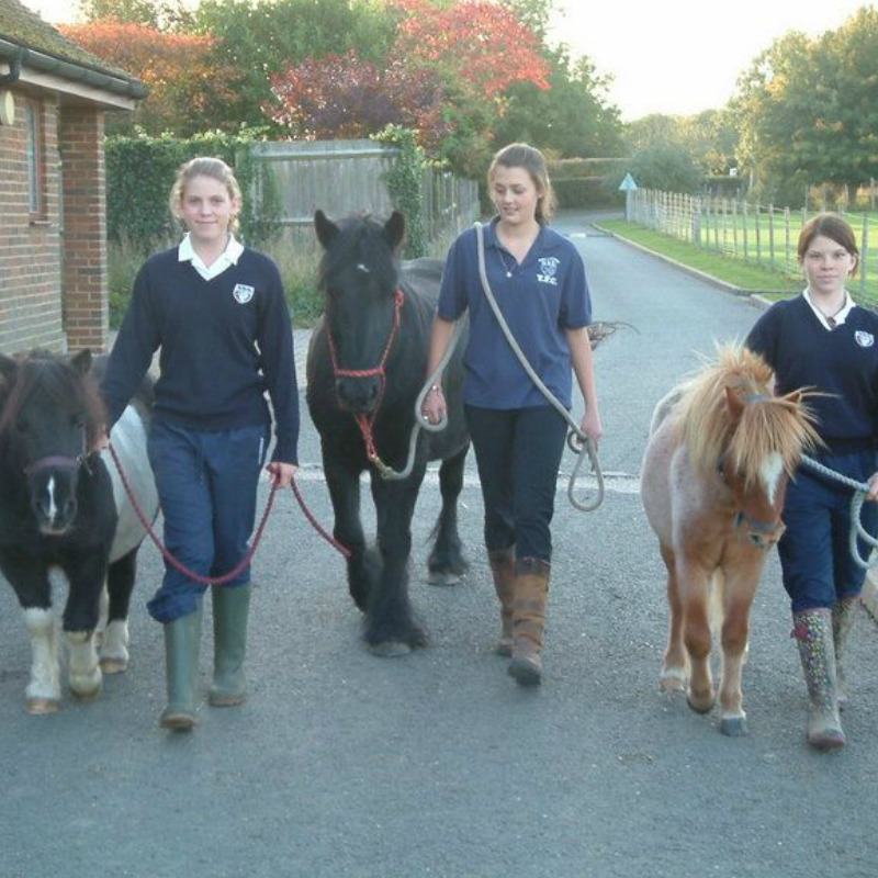 helping at the school stables